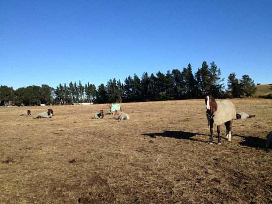 Kowhai Residential School of Riding Ltd: In a paddock