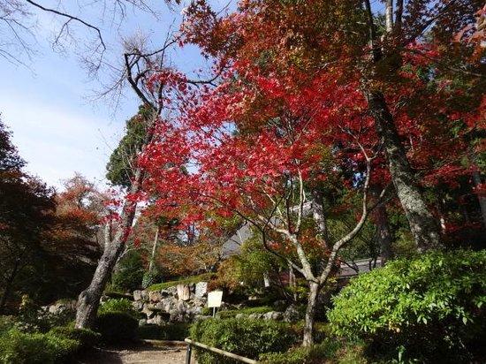Shakudoji Temple: 石道寺の紅葉
