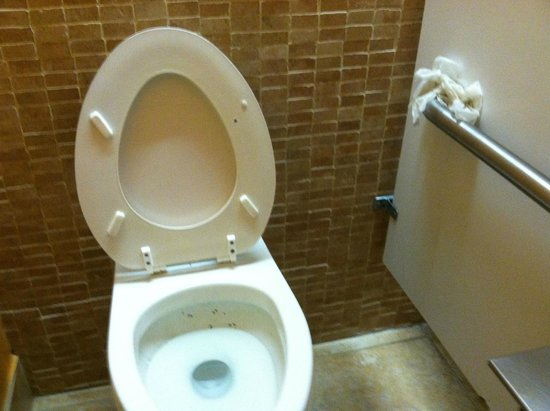 Embassy Suites by Hilton Tampa - Airport/Westshore: Men's bathroom stall 2nd floor, dirty in and outside