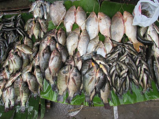 Bamboo Delight Cooking School: fresh fish in the market