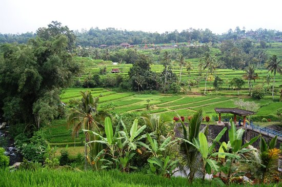 Jatiluwih Green Land: Sistim irigasi Bali atau Subak di Desa Jatiluwih, Tabanan
