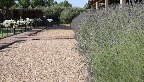 Surval Boutique Olive Estate : jardin
