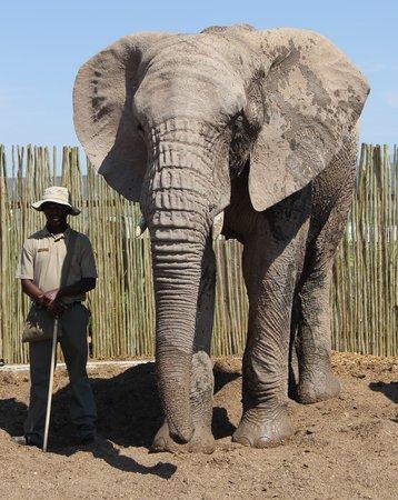 Buffelsdrift Game Lodge - Activities: elephants
