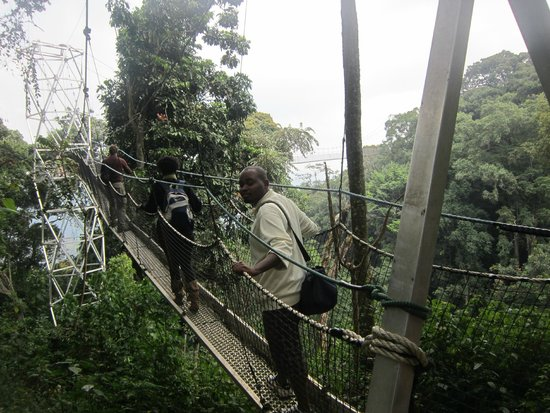 Nyungwe National Park : nice view over the forrest