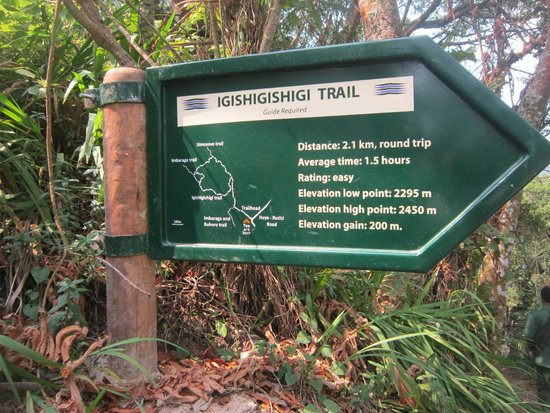 Nyungwe National Park : this is the trail that you have to follow to get to  cannopy
