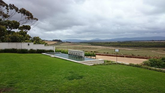 Black Oystercatcher : View from the outside tables