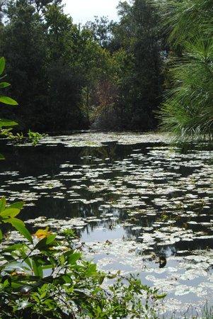 Jacksonville Arboreteum & Gardens : Pond at Jacksonville Arboreteum