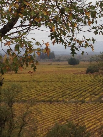 Wine Cube Tours: Vineyards in the fall.