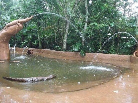 Resultado de imagen para parque das aves cocodrilos