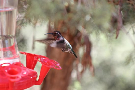 Sedona Cathedral Hideaway : The hummingbirds entertained us as we sat and ate breakfast.