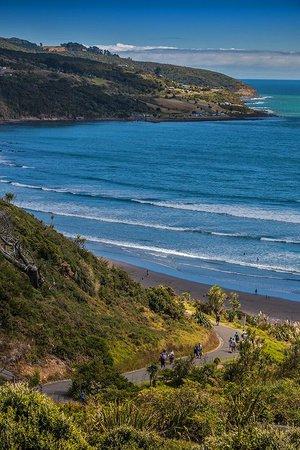 Raglan Scenic Tours: Raglan Manu Bay