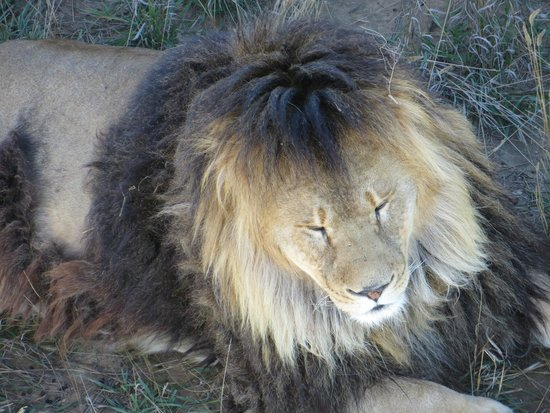 keenesburg black personals Colorado wild animal sanctuary euthanizes all its animals,  the commissioners added that the nearby keenesburg  colorado wild animal sanctuary euthanizes all.
