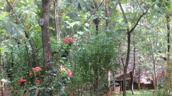 Vishram Village: le jardin