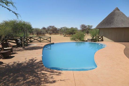 Ozongwindi Lodge : Pool