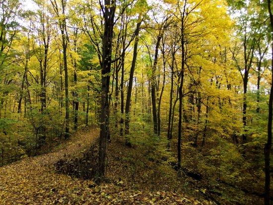 Van Buren State Park: Van buren SP Autumn Trail