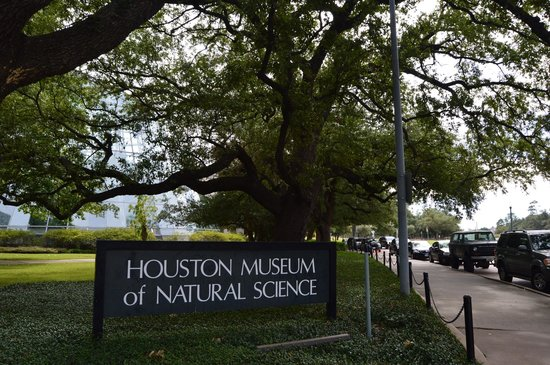 a report on a visit to the houston museum of natural science Houston museum of natural science is ranked #2 out of 10 things to do in  or  plan to visit on a thursday when admission to the museum is free from 3 to 6 pm .