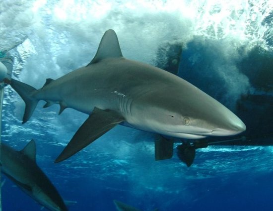Hawaii Shark Encounters (Haleiwa): Top Tips Before You Go