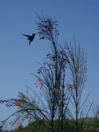 Top O' Tobago Villa & Cabanas: hummingbird on the patio
