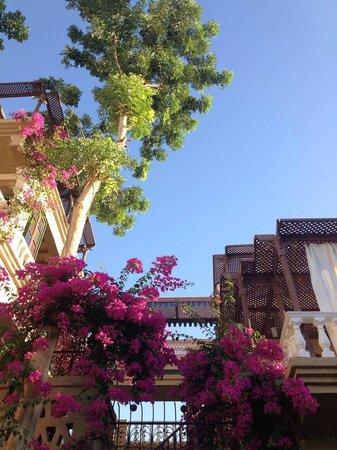 Villa Nile House : Vue du jardin sur deux terrasses et le bougainvillier