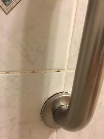 Comfort Inn Palo Alto: Mold in the shower