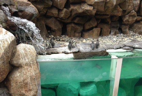 La Aurora Zoo: Penguins