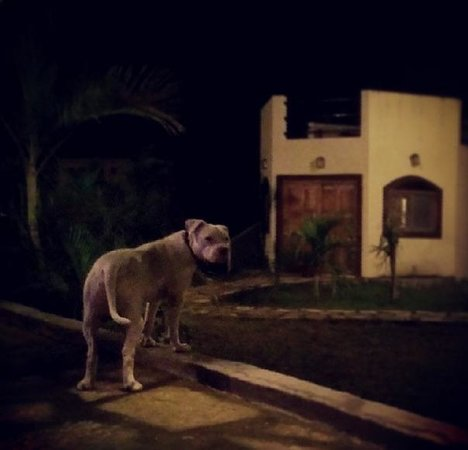 Surf Ranch Hotel & Resort: Buddy the dog outside our villa at night