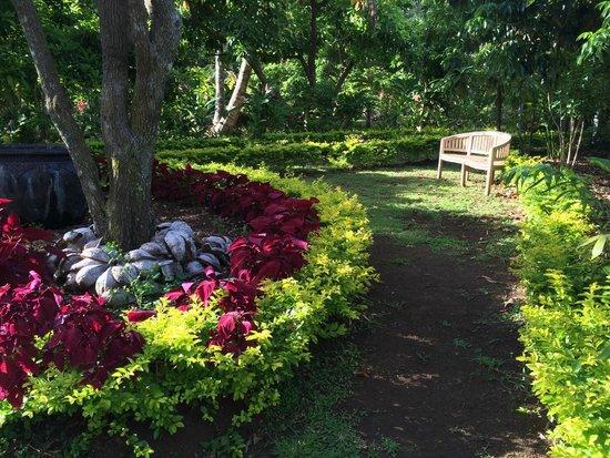 Maire Nui Botanical Gardens: Maire Nui 1