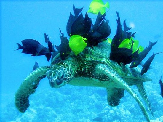 Reef Hunters Puerto Rico Spearfishing: Sea Turtle