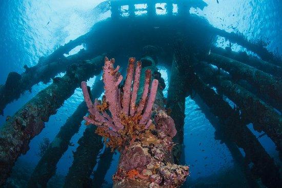 Reef Hunters Puerto Rico Spearfishing: Underwater Pier