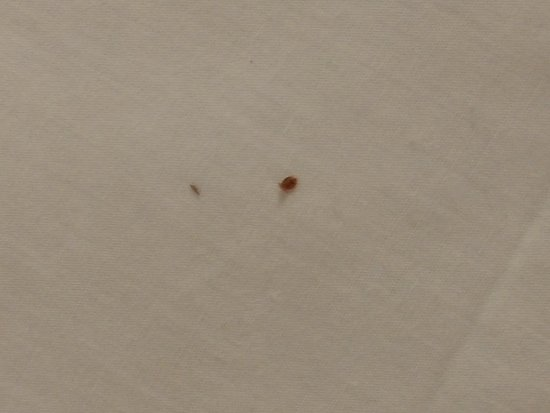Motel 6 Flint: Bedbugs