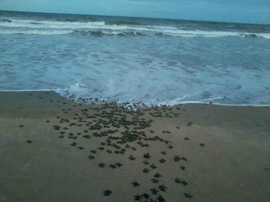 Aberto das Tartarugas Marinhas Museum