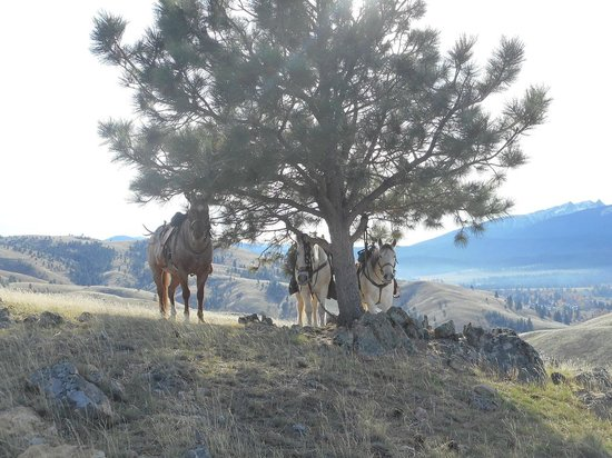 Darby, MT: Our Horses