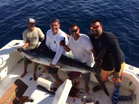 Stripped marlin releasse picture of fishing charters for Los cabos fishing charters