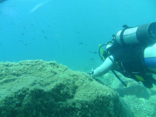 Korfez Diving