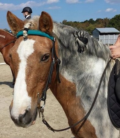 Holly Ridge Farm Equestrian Center: stormy dressed up as a spider at holloween show 2014