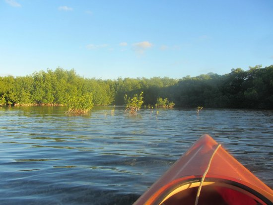 Blue Planet Kayak Eco-Tours : sunset tour