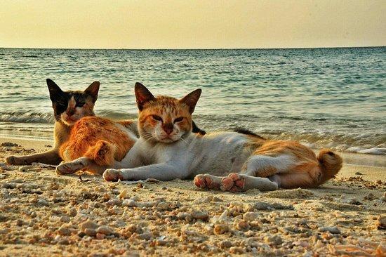 Kodingareng Keke Island: Sekawanan kucing terdampar kelaparan. Jika kesana tolong bawakan makanan