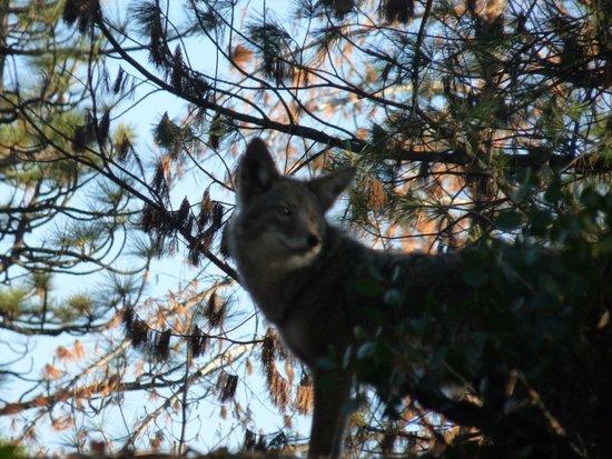 Big Trees Lodge, National Historic Landmark: Vida silvestre abundante
