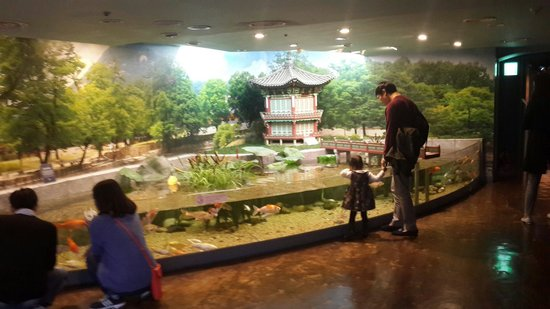 Cool looking koi pond picture of coex aquarium seoul for Carpe koi aquarium 300 litres
