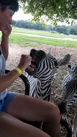 Africa Safari: Awsome!!