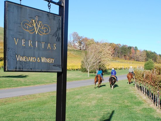 Keswick, Wirginia: Veritas Vineyard horseback riding...Ashton took great pics!