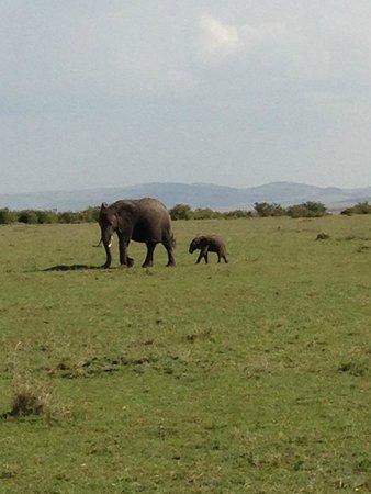 Olowuaru Keri Mara Camp: On safari
