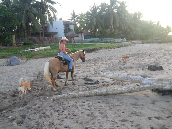 Tres Mujeres Boutique Hotel & Yoga Retreat: Loved riding on the beach and bought this horse.
