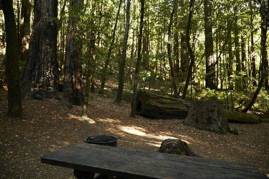 Big Basin Tent Cabins & Big Basin Tent Cabins - Picture of Big Basin Tent Cabins Boulder ...