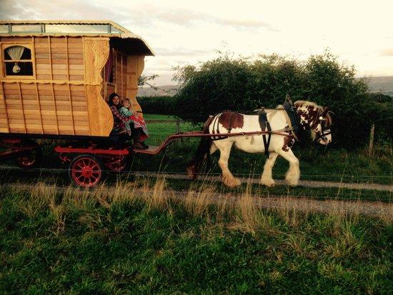 Wanderlusts Gypsy Caravans: Meg pulls the new wagon