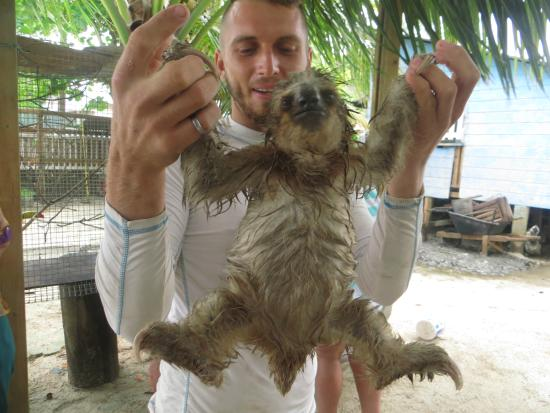 A Very Wet Sloth Picture Of Island Marketing Ltd Roatan Cruise Excursions Tours Coxen Hole Tripadvisor