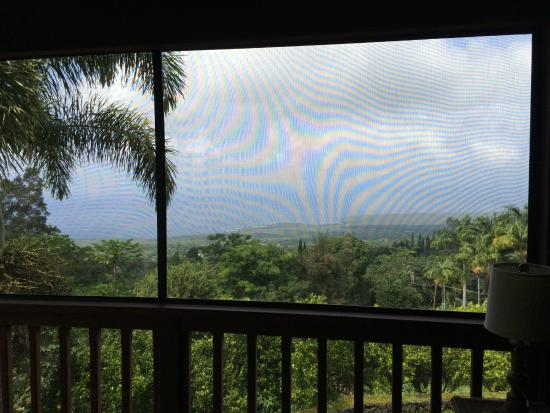 Aloha Guest House: Daytime view from the screened lanai adjacent to our room