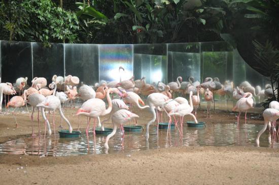 Resultado de imagen para parque das aves