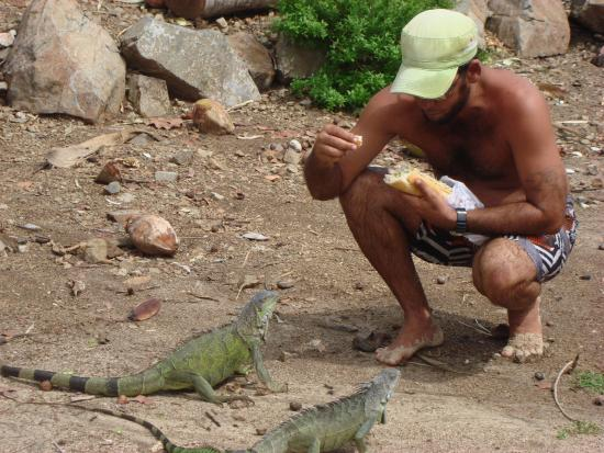 Coconut Reef Power Boat & Snorkelling Tours: Feeding the iguanas on Pinel Island!