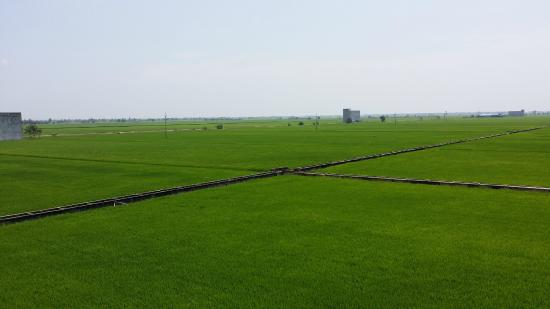 Sekinchan, Μαλαισία: Paddy field